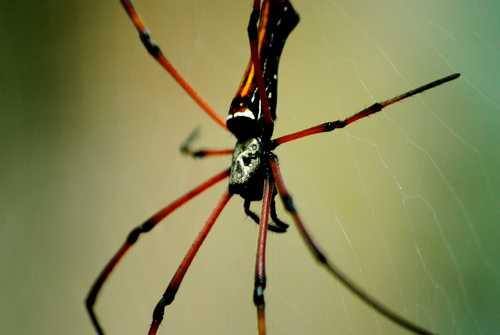Photo d'une araignée