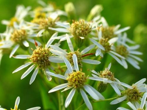 Les fleurs cultivées en pot ont besoin d'engrais