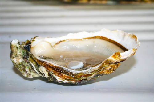 Coquille d'huître fraîchement ouverte