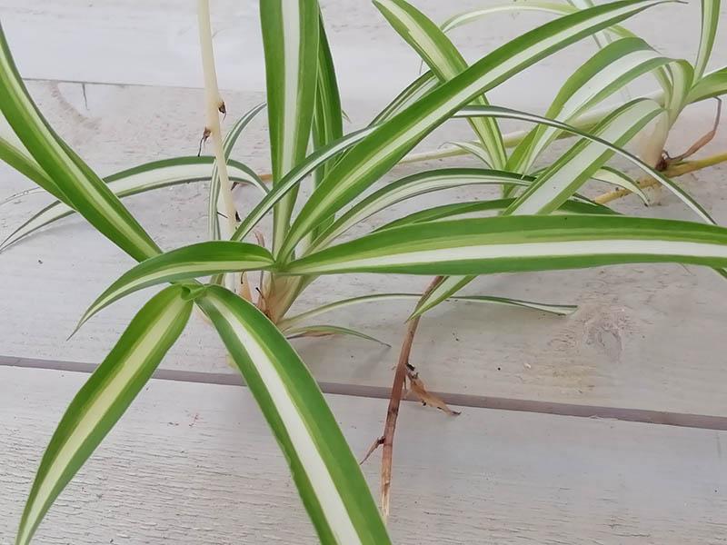 Dépollution de l'air par les plantes